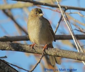 Umpqua Birds: Backyard Birds in Douglas County, Oregon